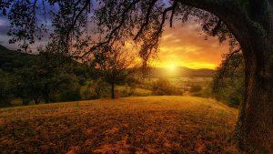 מצילים את העולם- איך טבעונות מסייעת לאיכות הסביבה