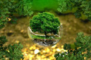 מצילים את העולם איך טבעונות מסייעת לאיכות הסביבה