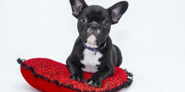 אימצתם כלב הכירו את כל סוגי הקולרים לכלבים לפני הרכישה.